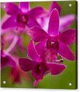 Orchid Splendor Acrylic Print