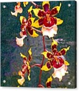 Orchid Spray By Pottery  Acrylic Print