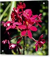 Orchid Study V Acrylic Print