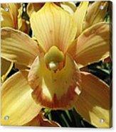 Orchid Sunshine Acrylic Print