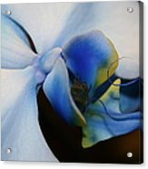 Orchid Taste Acrylic Print