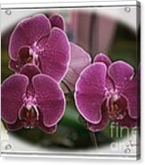 Orchid Trio Acrylic Print