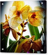 Orchid Vignette Acrylic Print