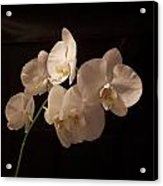 Orchid White Acrylic Print