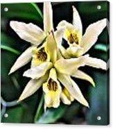 Orchid Yellow Acrylic Print