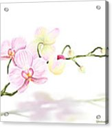 Orchidea Acrylic Print