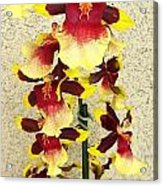 Orchids 18 Acrylic Print