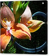 Orchids 5 Acrylic Print
