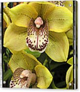 Orchids  9 Acrylic Print