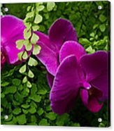 Orchids And Baby Tears Acrylic Print