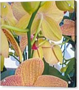 Orchids And Buds Acrylic Print by Robert Bray