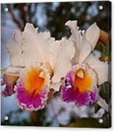 Orchid Elsie Sloan Acrylic Print