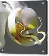 Orchid's Face Acrylic Print