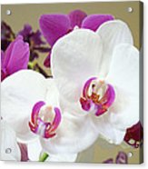 Orchids Floral Art Prints White Pink Orchid Flowers Acrylic Print