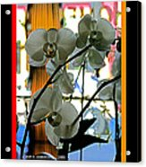 Orchids For A Lady Acrylic Print