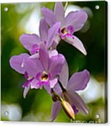Orchids For You Acrylic Print