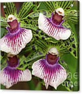 Orchids Four Acrylic Print