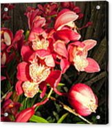 Orchids Galore Acrylic Print