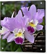 Orchids In A Basket Acrylic Print