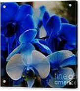 Orchids In Blue  Acrylic Print
