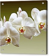 Orchids In Green Acrylic Print