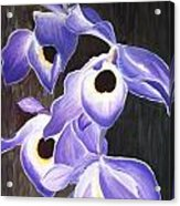 Orchids In Tewantin Acrylic Print