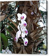 Orchids In The Opryland Hotel In Nashville Tennessee Acrylic Print