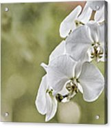 Orchids Acrylic Print by Karen Walzer