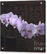 Orchids Loretta Acrylic Print