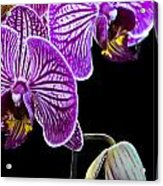 Orchids On Black Background Acrylic Print