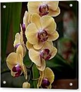 Orchids Pictures 10 Acrylic Print