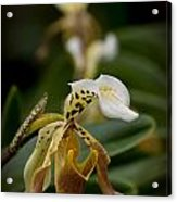 Orchids Pictures 28 Acrylic Print