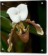 Orchids Pictures 31 Acrylic Print
