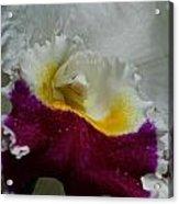 Orchid's Royal Carpet Acrylic Print