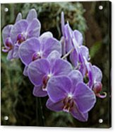 Orchids Square Format Img 5437 Acrylic Print