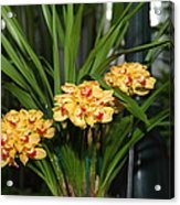 Orchids - Us Botanic Garden - 01137 Acrylic Print by DC Photographer