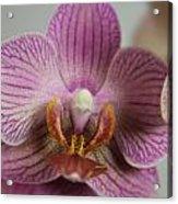 Orchids1 Acrylic Print