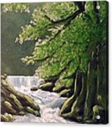 Oregon Creek Acrylic Print