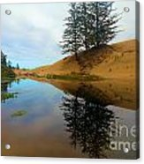 Oregon Dunes Pond Acrylic Print