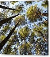 Oregon Forest Acrylic Print