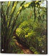 Oregon Forest Trail Acrylic Print