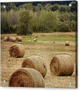 Oregon Hay Bales Acrylic Print by Carol Leigh