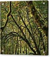 Oregon Rainforest Green Acrylic Print