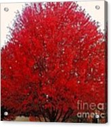 Oregon Red Maple Beauty Acrylic Print