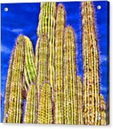 Organ Pipe Cactus Arizona By Diana Sainz Acrylic Print