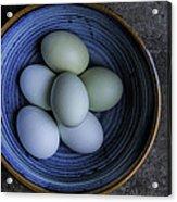Organic Blue Eggs Acrylic Print
