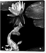 Oriental Koi Fish And Water Lily Flower Black And White Acrylic Print
