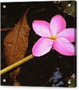 Oriental Touch  Acrylic Print