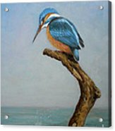 Original Animal Oil Painting Bird  Art Kingfisher On Canvas#16-2-6-15 Acrylic Print