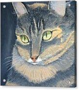 Original Cat Painting Acrylic Print